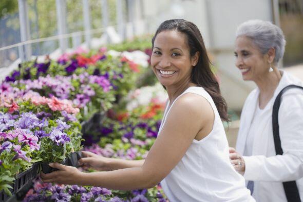 Visita el 'garden center'. Cada temporada vas al 'shopping' a ver qué ha...