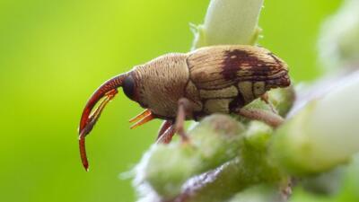 Escarabajos: los más diversos de la Tierra