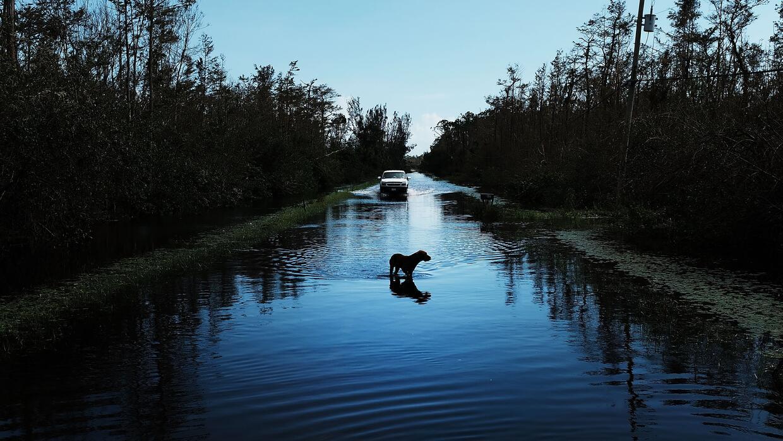 Un perro camina por una zona rural en Naples al día siguiente de que Irm...