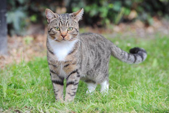 Smudge un bello felino, al ver a su dueño en peligro dio un brinc...