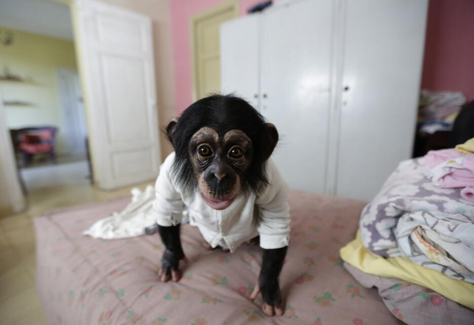 Monkey business in Havana 51.jpg