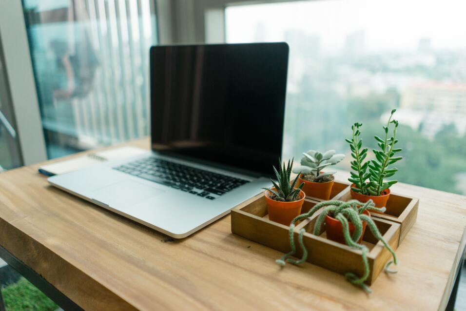cactus en oficina