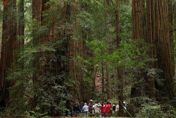 3. Redwood National Park