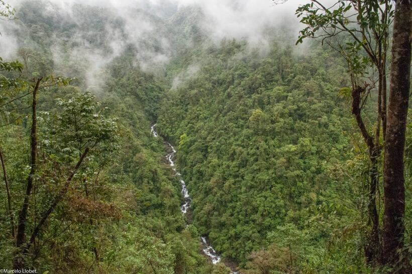Un tercio del planeta está cubierto de bosques y son el hogar del 80% de...