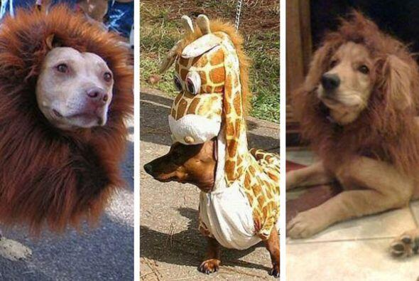 madagascar perro mascotas