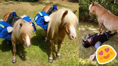 Mujer entrena ponies para realizar primeros auxilios