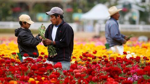 Los trabajadores hispanos impedirán el descenso en la poblaci&oac...