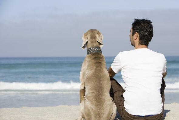 """Descubre por qué los perros merecen ser llamados los """"mejores amigos del..."""