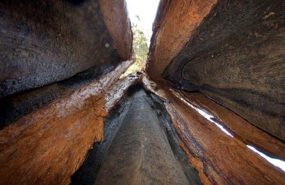 Tres partes de un tronco.