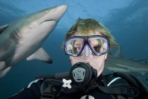 Mientras Aaron tomaba las fotografías, un tiburón mordió su cámara.