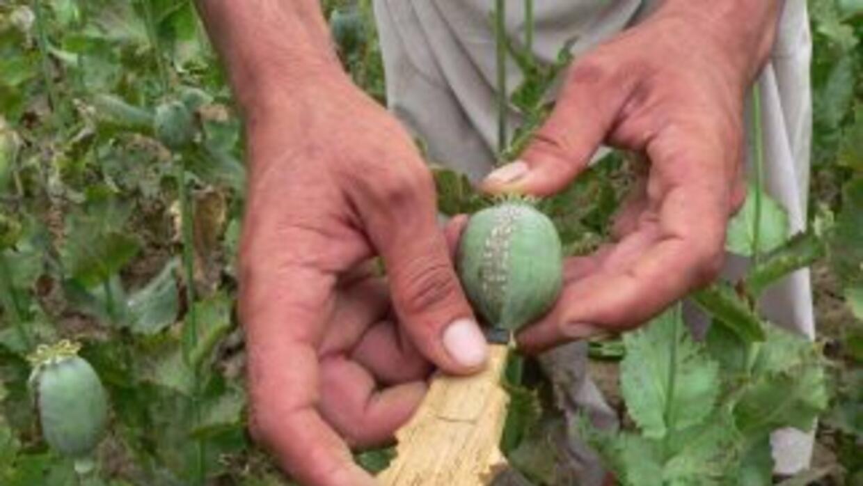 Las autoridades mexicanas decomisaron cerca de una tonelada de semilla d...