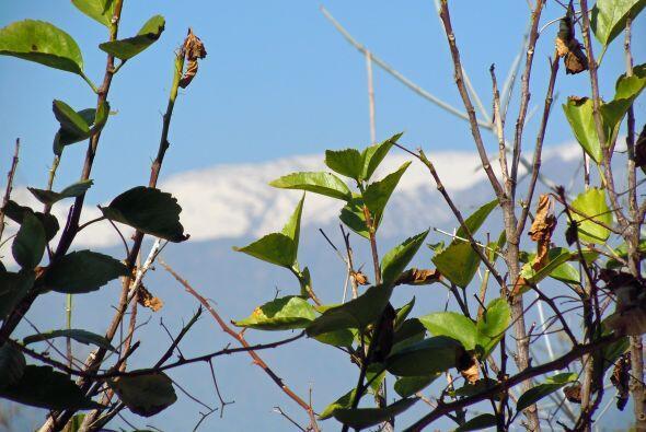 El 18 de Septiembre y la primavera en Chile.