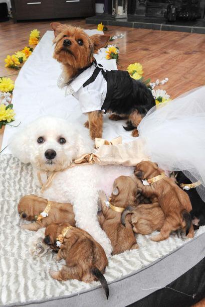 ¡Este es un amor perro! Y es que estos cachorros unieron su amor c...