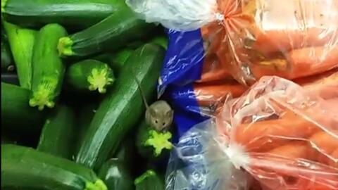 Un cliente del mercado El Super grabó un video de un ratón merodeando po...