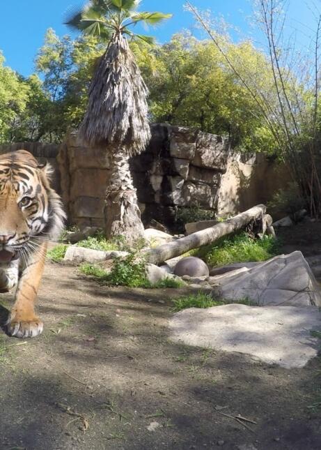 Google puso cámaras con sensor de movimiento para retratar a los animales.