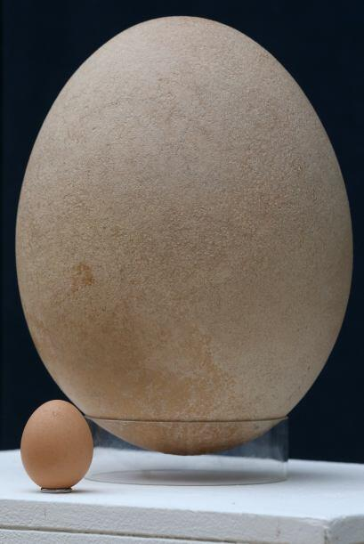 Sin duda se trata de un rarísimo huevo