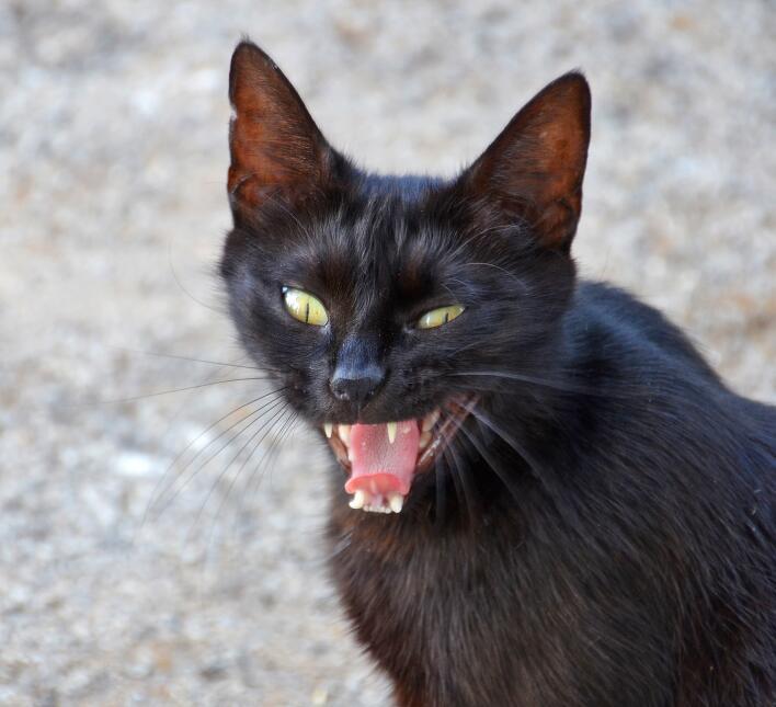 Conoce el misticismo del gato negro  15.jpg