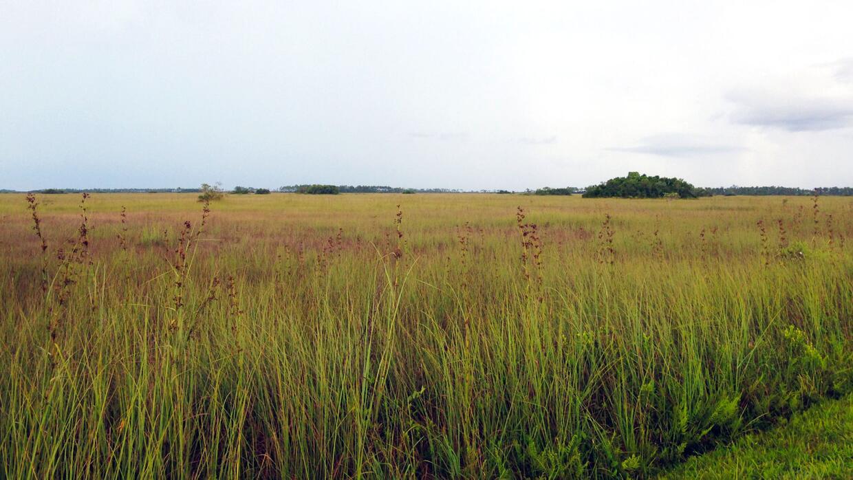 Plano, bajo y sobre roca firme porosa, el Sur de Florida es extremamente...