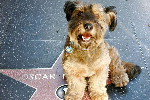 Joanne Lefson adoptó a este cachorro y cuando se dio cuenta de que había...