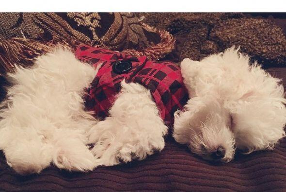 El cachorro es travieso y dormilón, ¡después de todo es un pequeño!