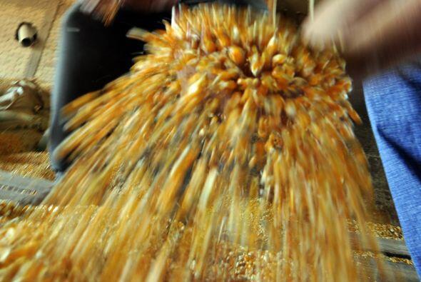 La llegada del maíz transgénico divide a Paraguay, con el telón de fondo...