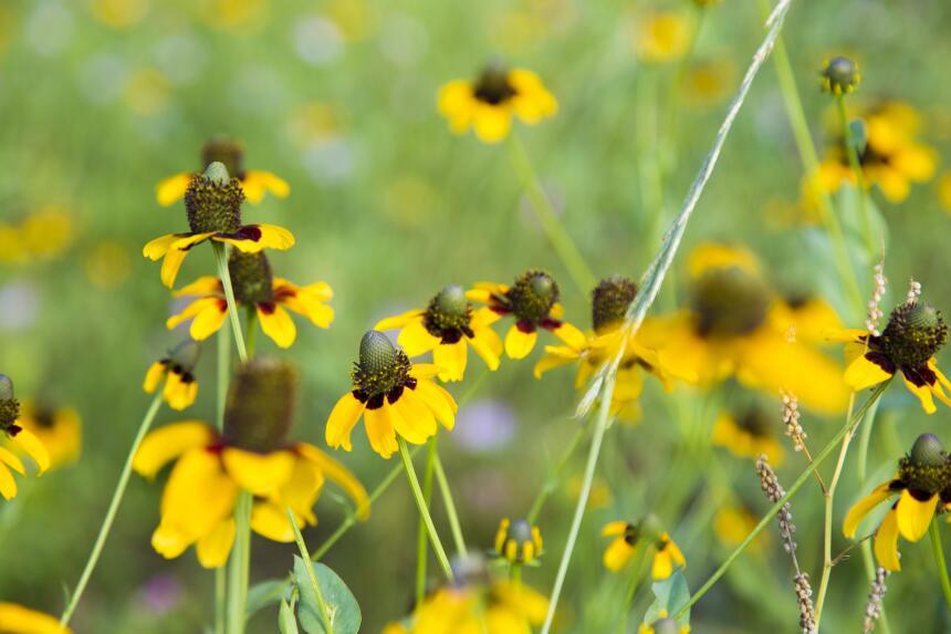Las flores silvestres más exóticas de Texas flores-galeria.jpg
