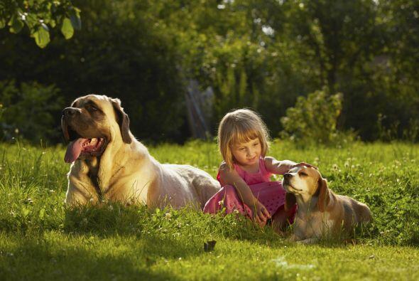 Los canes resultan una excelente terapia para niños que presenten...