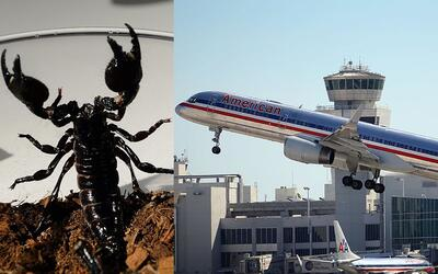 Un vuelo de American Airlines en California fue cancelado luego de que s...