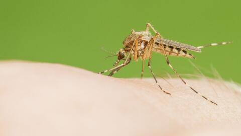 California en Alerta ante la presencia del virus del Zika