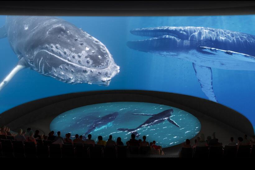Las producciones audiovisuales serán creadas por el acuario.