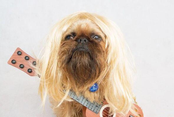 Este perrito disfruta que lo disfracen de artistas famosos, en esta foto...