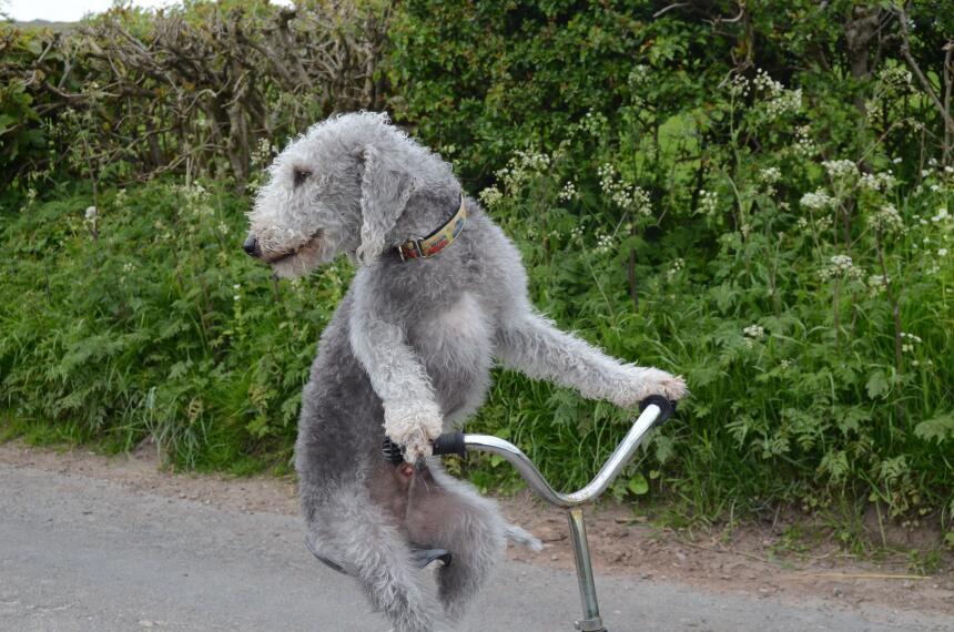 ¡Guau! Este perro es extraordinario.