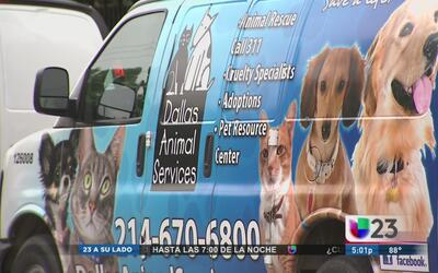 Presentan plan de acción contra la sobrepoblación de perros callejeros