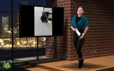 Columba te habla acerca de las mascotas!