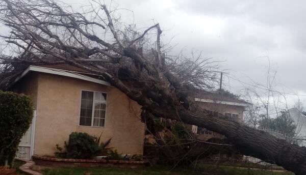 Árbol caído sobre una casa en Long Beach