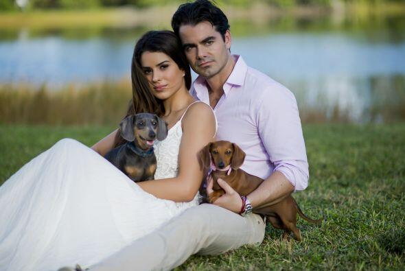 Sin embargo el amor de padres lo transmiten a sus dos pequeños perritos,...