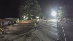 Cómo mudaron el árbol de Sequoia más grande de Idaho