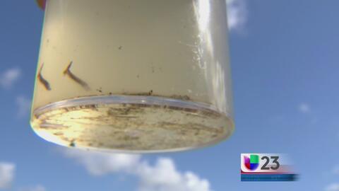 Detectan foco de transmisión del zika en Liberty City