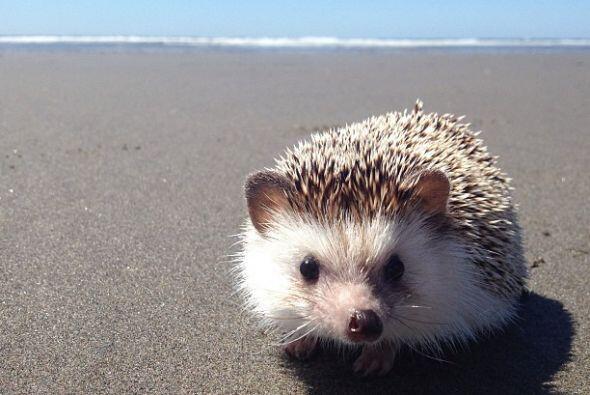 Un día en la playa puede quitarle el estrés a cualquier, y él lo sabe bien.