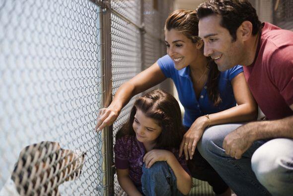 Elige una mascota que sea adecuada para ti y para tu familia, no sólo ad...