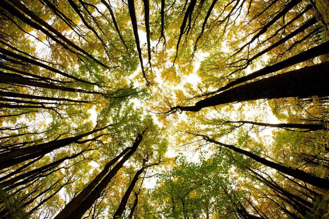 Así luce el dosel del bosque del Parque Nacional Shenandoah de Virginia,...