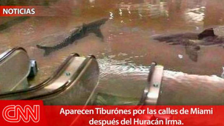 A la foto falsa de los tiburones se le quiere aumentar la credibilidad e...