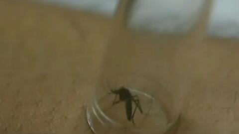 Continúan las jornadas de fumigación por la presencia de mosquitos en Hi...