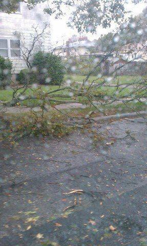 Ottocgr ramirez no envia esta foto de cómo el viento estpa tirando árbol...