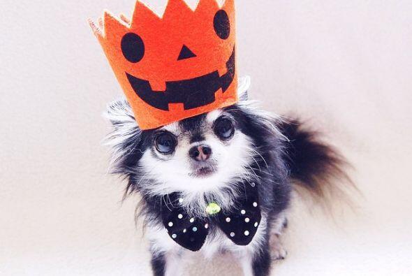 A Dada le gusta que sus dueños la disfracen para Halloween.