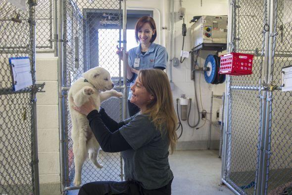 Ahora los veintitrés perrritos están en refugios de animales donde recib...