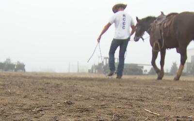 Internos de correccional de Sacramento se rehabilitan entrenando caballo...