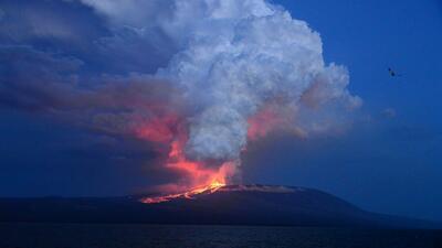 Erupción de volcán en Islas Galápagos pone en riesgo especies únicas en...