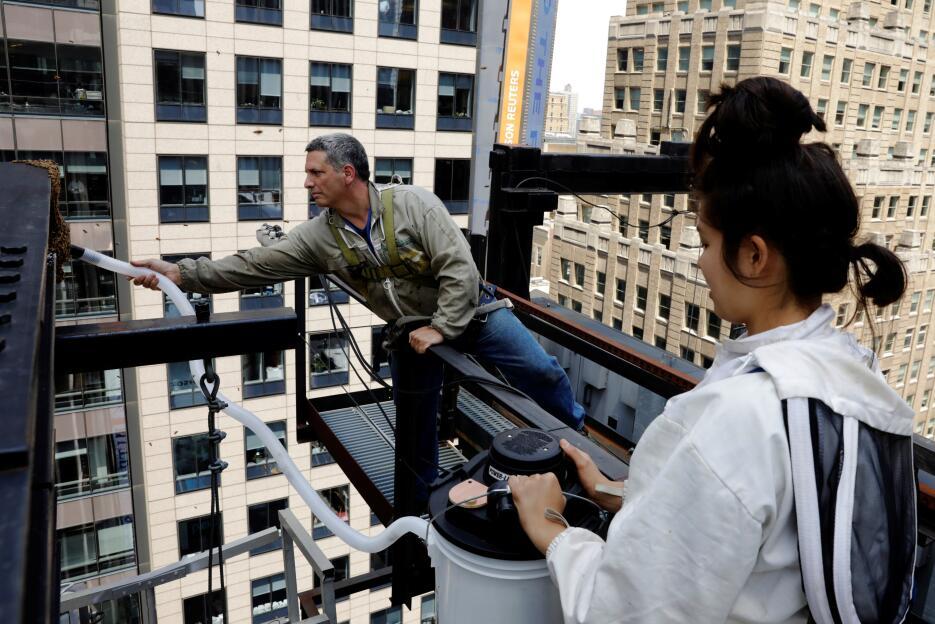En fotos: Remueven con precisión milimétrica un gigantesco panal de abej...