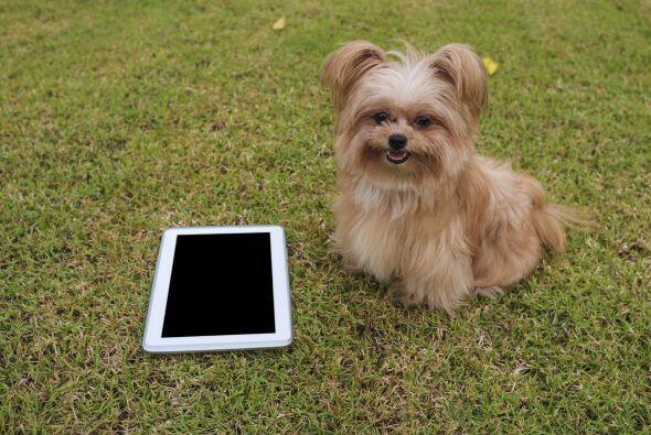 En la página eliges a tu perro y le das click… ¡pero ocurre una sorpresa!